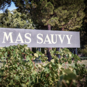 Découvrez l'oenotourisme avec le Mas Sauvy